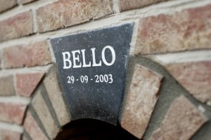Een mooie steen voor Bello.